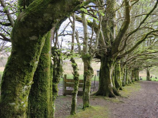 Foto de Lochgilphead