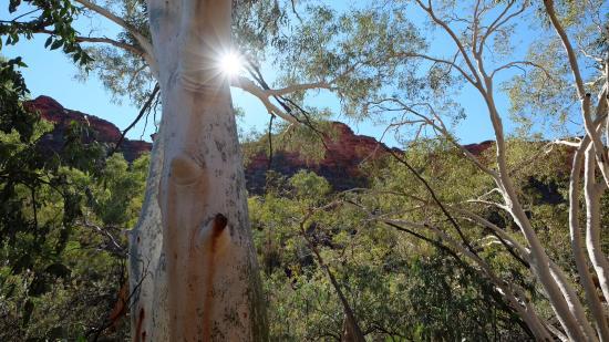 Yulara, Αυστραλία: Kings Canyon