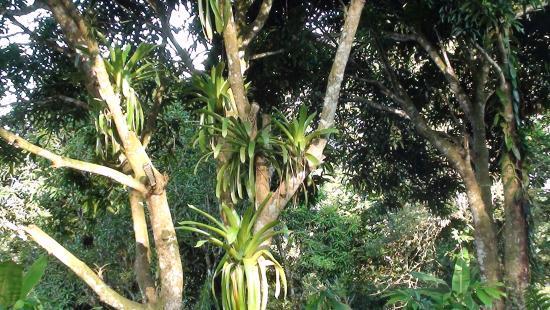 Boca Sabalos, Nikaragua: El bosque humedo tropical
