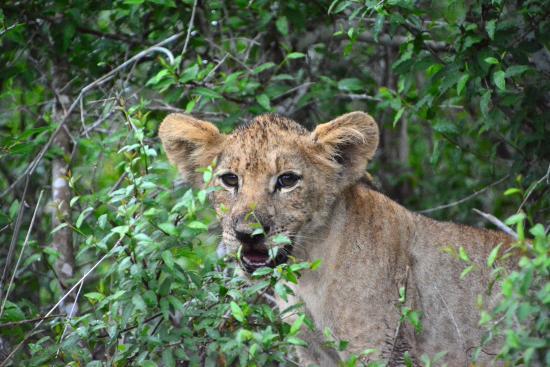 Foto de Phinda Private Game Reserve