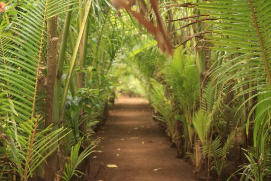 Casa Iguana: caminos entre las habitaciones y los espacio compartidos!