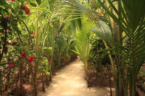 Casa Iguana: camino a la Casíta Número 1
