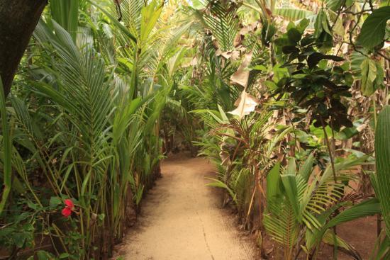 Casa Iguana: primera curva del camino a la Casíta Número 1Q