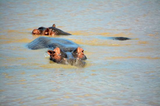 St Lucia, Sudáfrica: Hippo's
