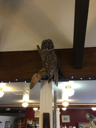 Center for Alaskan Coastal Studies: Owl on display