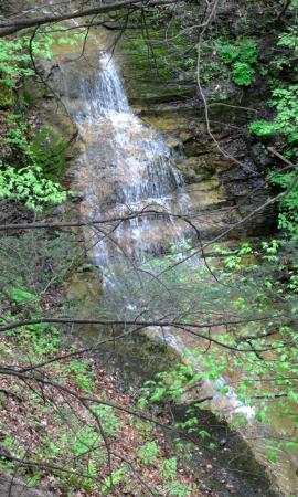 Cayuga Nature Center : Dennison Falls