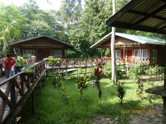 Borneo Nature Lodge: Some of the huts