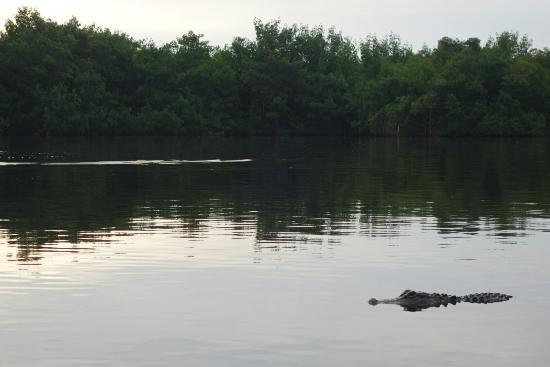 Everglades City, FL: DSC03104_large.jpg