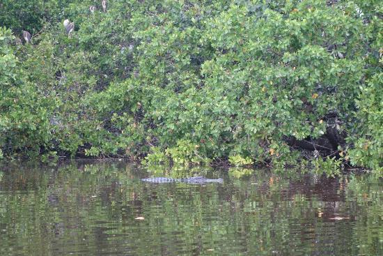 Everglades City, FL: DSC03112_large.jpg