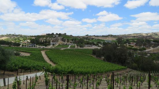 Temecula, CA: View from Oak Mountain vineyard.