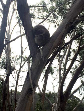 Cowes, أستراليا: photo2.jpg