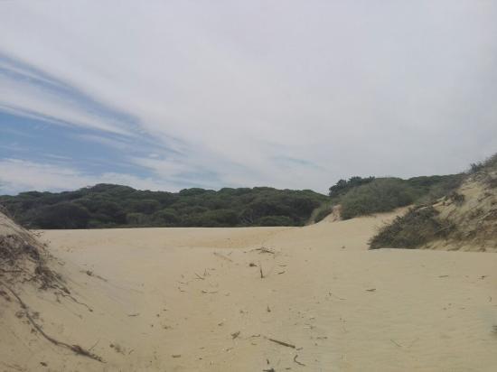 Parque Natural Enebrales de Punta Umbria