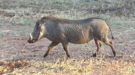 Mabula Private Game Reserve, Sydafrika: 20160521_071031_large.jpg