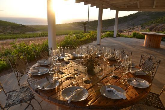Sorso, Ιταλία: Degustazioni dei vini della tenuta con vista mozzafiato sul Golfo dell'Asinara