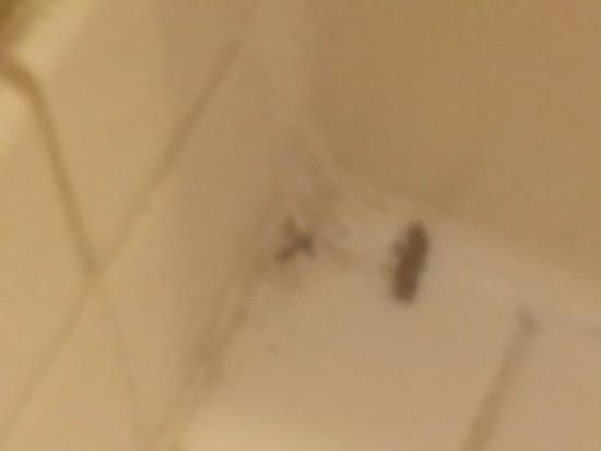 Flat Rock, MI: Bugs in room