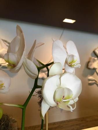 The Westin Galleria Dallas: Orchids all around the lobby