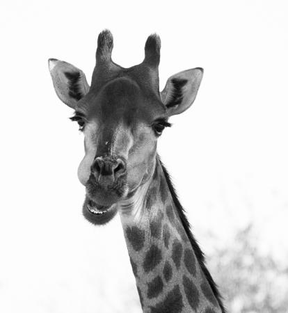 Timbavati Private Nature Reserve, แอฟริกาใต้: On a game drive