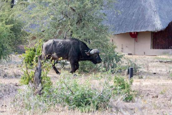 Timbavati Private Nature Reserve รูปภาพ