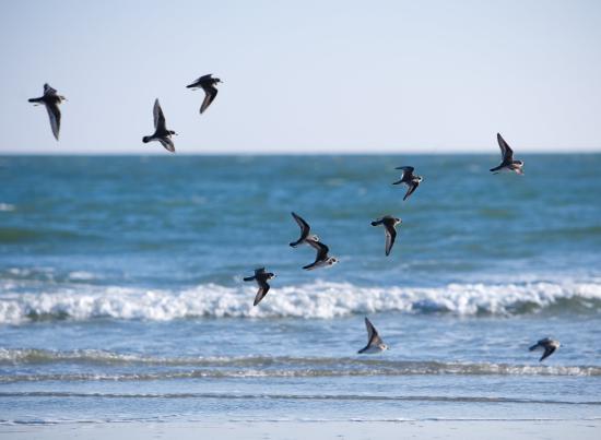 Isle of Palms, SC: Wild Dunes_Nature_BirdonBeach