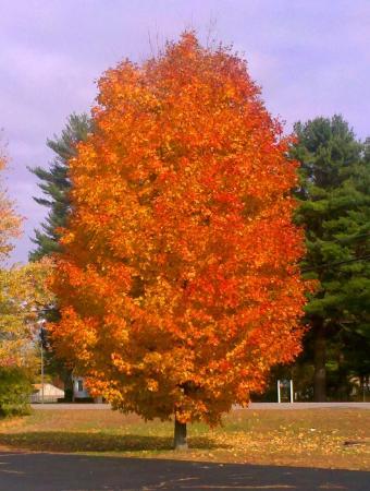 Keene, Nueva Hampshire: Beautiful Fall colors everywhere