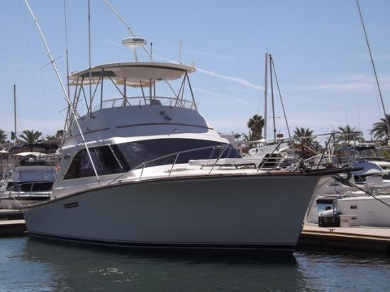Shady Lady - Ocean Yachts 44' - Picture of San Carlos Fishing