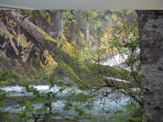 Sisters, Oregón: River trail just above Koosah Falls