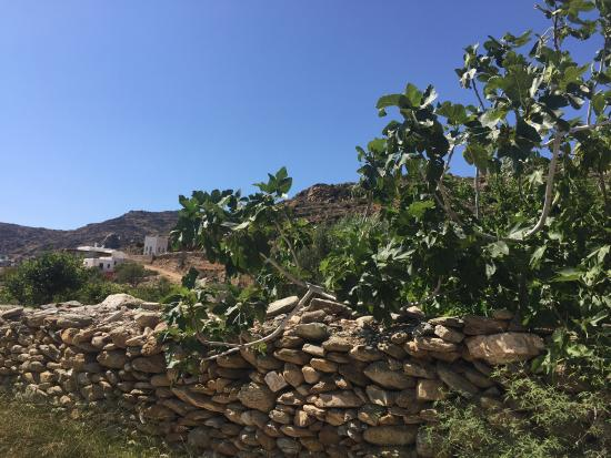 Milopotas, Grecia: photo1.jpg