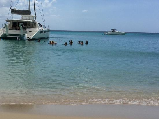 Holetown, Barbados: Swimming with the turtles
