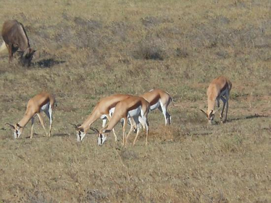 Национальный парк слонов Аддо, Южная Африка: Schotia Safari