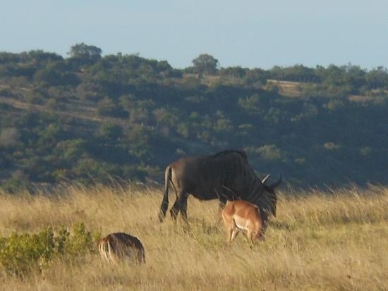 Schotia Tooth and Claw Safari : Schotia Safari