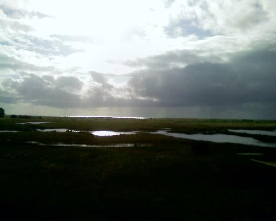 Long Beach, WA: View to ocean showing spring retention ponds with birds.