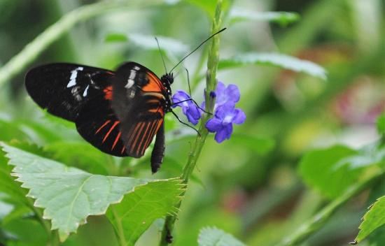 Westminster, CO: Butterfly Pavilion!