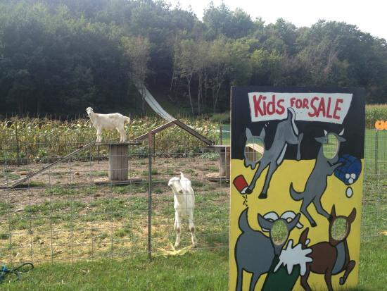 Cross Plains, WI: Goats!