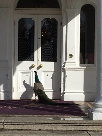 Lucan, Irland: I called him Stan because he would always stand by the door :)