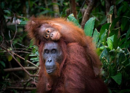 Central Borneo Guide
