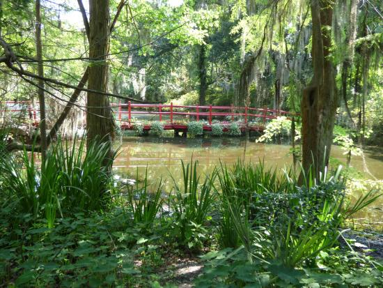 Charleston Adventure Tours: Magnolia Plantation gardens