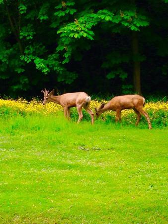 Vernon, Kanada: Polson Park