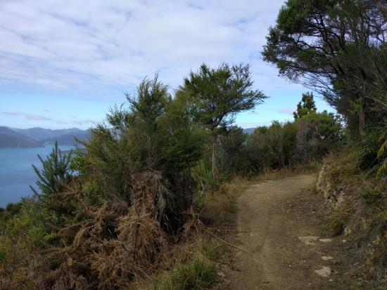 Picton, Nueva Zelanda: Lots of wide track like this