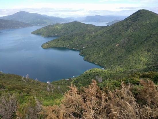 Queen Charlotte Track: scenic lunch spot but no table or bench.