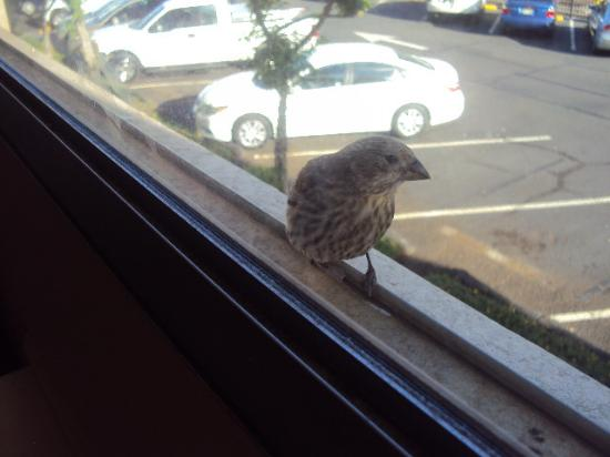 Airport Honolulu Hotel: Don't feed the begging birds
