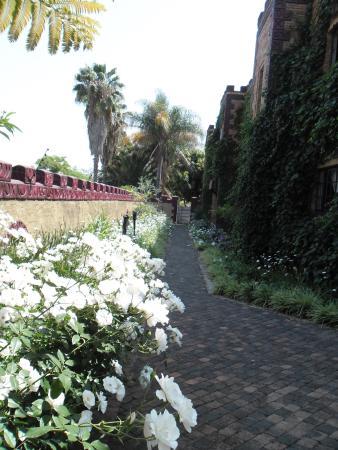 Polokwane, Sudáfrica: ICEBERG ROSES