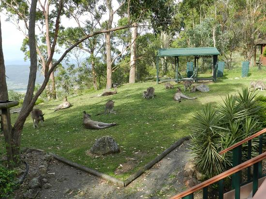 Vacy, Australia: Backyard friends