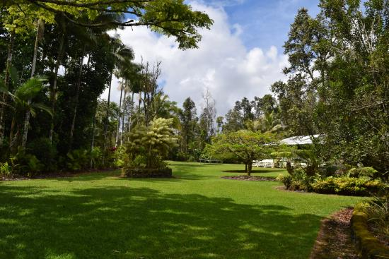 Pahoa, HI: This shows less than half of the grounds. The trampoline at the far end of the yard was a favori
