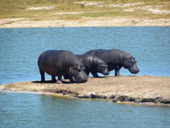 Hwange National Park 사진