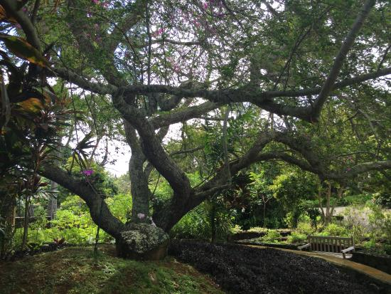 Kilauea, Hawaï: Grounds