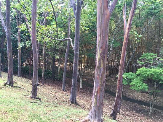 Kilauea, HI: Grounds