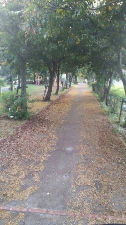 Dalin Bikeway