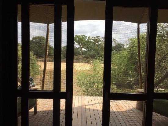 Ngala Private Game Reserve, Afrika Selatan: photo4.jpg