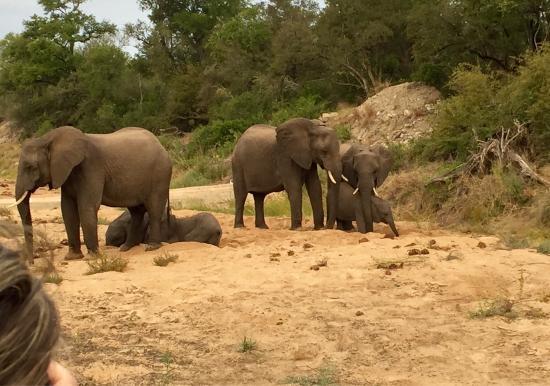 Ngala Private Game Reserve, Afrika Selatan: photo7.jpg