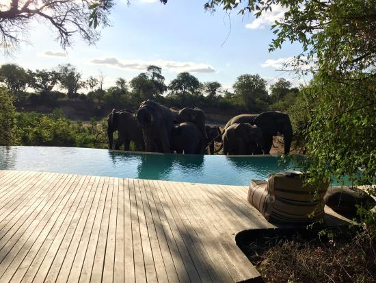 Ngala Private Game Reserve, Afrique du Sud : photo9.jpg